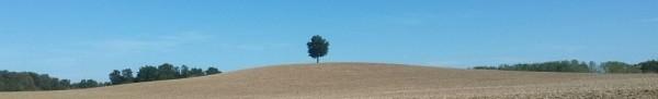 landschapsschrijven