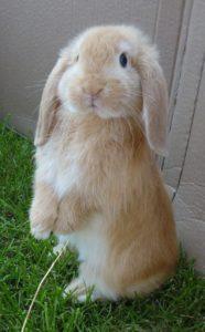 Een totaal onschuldig jong konijntje. In elk mens woont er eentje, al zit ie soms wat diep weggedoken.
