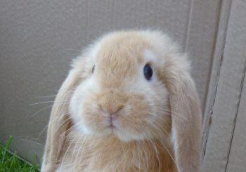 Bekijk jezelf met dezelfde zachtheid als waarmee je naar een konijntje zou kijken.